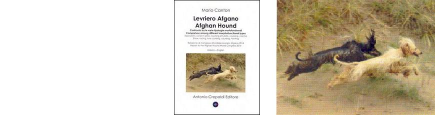 Levriero Afgano – Afghan Hound