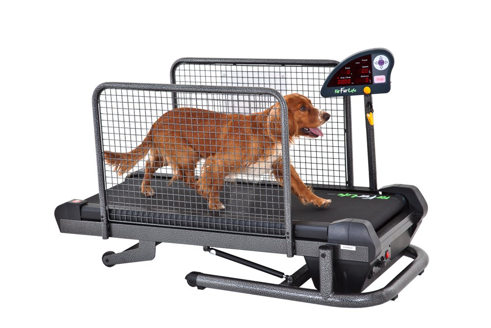 Oxygen consumption and hemodynamic responses during graded treadmill exercise in the dog