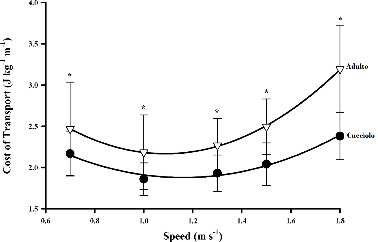 Metabolic cost of grade running in dogs