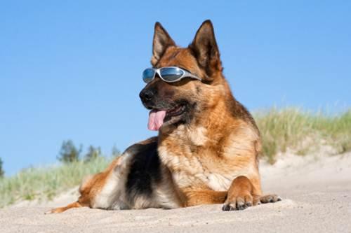 Provvedimenti relativi all'accesso degli animali alle spiagge