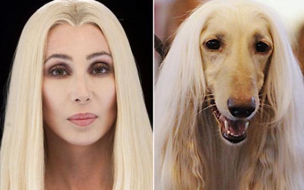Do Dogs Resemble Their Owners? | DogJudging® - Il mondo della letteratura cinofila.