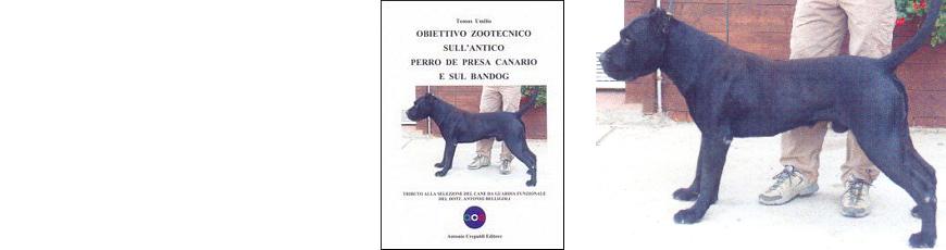 Obiettivo zootecnico sull'antico Perro de Presa Canario e sul Bandog