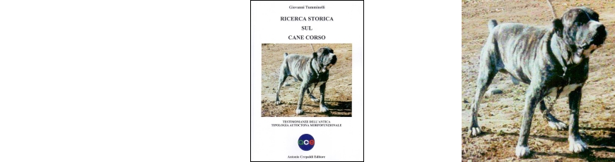 Ricerca storica sul Cane Corso