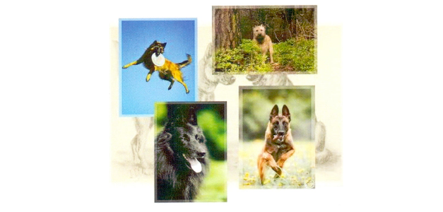 Zootechnical objective about Belgian Shepherd
